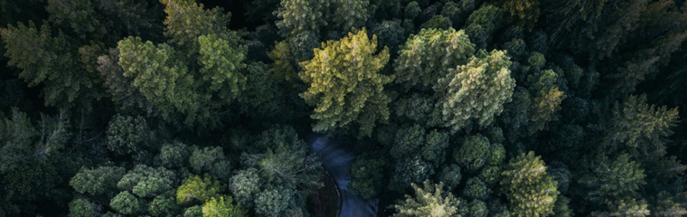 drone_view_aerial_view_forest_woodland_lane-1410050.jpg!d.png